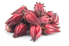 Roselle group. On white background Royalty Free Stock Photo