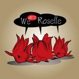 Roselle herb. Royalty Free Stock Image