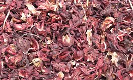 The Roselle (Hibiscus Sabdariffa) Stock Photo
