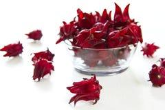 Roselle [Hibiscus sabdariffa] Royalty Free Stock Images