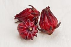 Roselle (Hibiscus sabdariffa) Stockfotografie