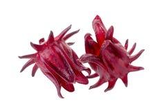 Roselle Hibiscus sabdariffa red fruit flower on white background Stock Image