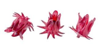 Roselle Hibiscus sabdariffa red fruit flower on white background Stock Photos