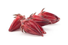 Roselle isolated. On white background Stock Image