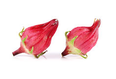 Roselle isolated on white background.  Royalty Free Stock Photography