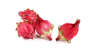 Roselle isolated on white background.  Royalty Free Stock Photo