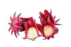 Roselle poślubnika sabdariffa czerwony owocowy kwiat na białym tle Zdjęcia Stock