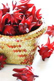 Roselle red Stock Photography