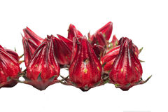 Roselle Stock Photography