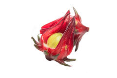 Roselle Royalty Free Stock Image