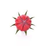 Rosellefruit op witte achtergrond wordt geïsoleerd (het fruit dat van Thailand) Royalty-vrije Stock Foto's