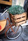 Rosemary σε ένα ξύλινο κιβώτιο Στοκ Εικόνες