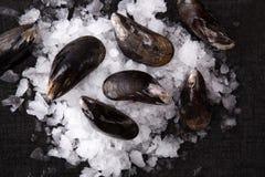 rosemary лимона еды предпосылки продукты моря черного свежего роскошного salmon курили Стоковые Фото