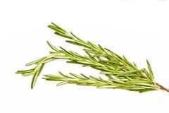 rosemary травы пряный Стоковая Фотография