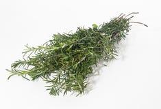 rosemary травы Стоковые Фотографии RF