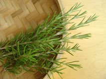 Rosemary 1 Images stock