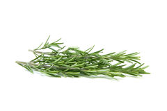 Rosemary Royalty Free Stock Photography