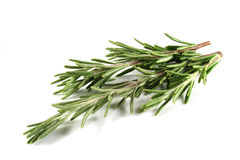 Rosemary. On a white background royalty free stock photo