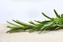 Rosemary Stock Photography