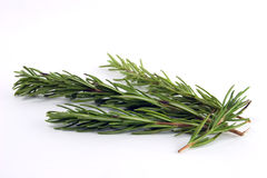 rosemary Fotografia Royalty Free