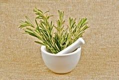 Rosemary image stock