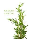 Rosemary Fotografie Stock Libere da Diritti
