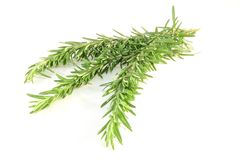 Rosemary Fotos de Stock