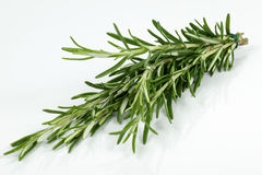 Rosemary. Bunch of rosemary in the studio Stock Photography