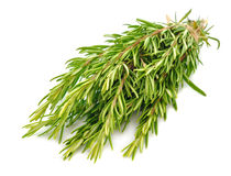 Rosemary. On white background Stock Photos