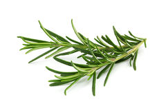 Free Rosemary Royalty Free Stock Image - 36440686