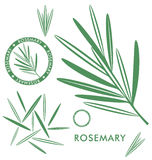 rosemary Fotos de Stock Royalty Free