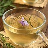 Βοτανικό τσάι της Rosemary Στοκ εικόνα με δικαίωμα ελεύθερης χρήσης
