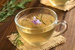 Βοτανικό τσάι της Rosemary Στοκ Εικόνες