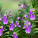 Rosemary achtergrond Nuttige groene kruiden heerlijk kruiden smakelijke smaakstof voor voedsel Royalty-vrije Stock Foto's