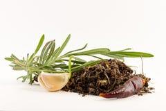 Rosemary, aglio, pepe di peperoncino rosso e spezie secche Fotografie Stock Libere da Diritti