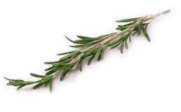 Rosemary aisló en blanco. Fotos de archivo
