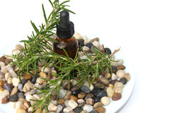 Rosemary Aromatherapy Photographie stock libre de droits