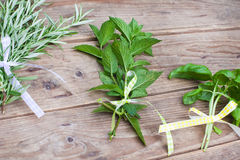 Rosemary, basil and pepermint plants Royalty Free Stock Photos
