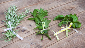 Rosemary, basil and pepermint plants on wooden table Royalty Free Stock Photo