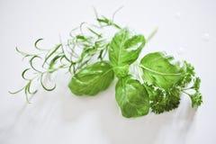 Rosemary, basilicum & peterselie Stock Afbeelding