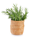 Rosemary in basket Royalty Free Stock Photo