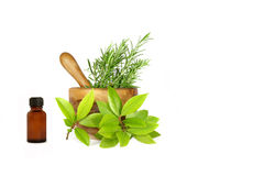 Rosemary and Bay Leaf Herbs Stock Photos