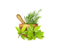 Rosemary and Bay Leaf Herbs Stock Photography