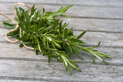 Rosemary bound royalty free stock photos