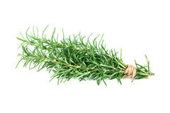 Rosemary bound on a white background Royalty Free Stock Photo