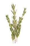 Rosemary branch Stock Photos