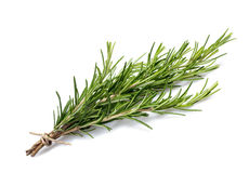Rosemary branch Stock Photography