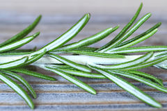 Rosemary branch Royalty Free Stock Image