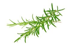 Rosemary branches Stock Photos