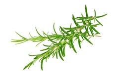 Rosemary branches stock photos